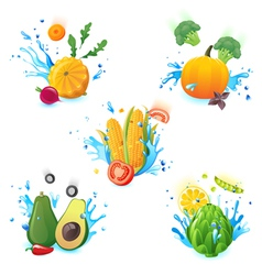 Vegetables in splashes vector