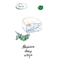piece of mexican cotija cheese with cilantro vector image