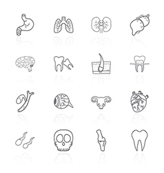 set of contour icons of internal human vector image