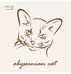 Abyssinian cat vector