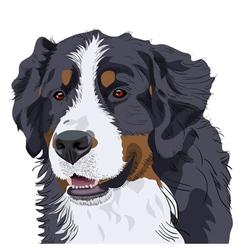 Bernese mountain dog vector
