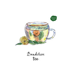 glass cup of healthy dandelion tisane tea vector image vector image