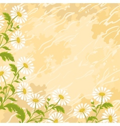 Background chamomile flowers vector image vector image