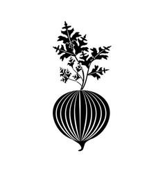 Contour fresh onion with plant organ food vector
