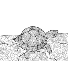 Turtle coloring book for adults vector