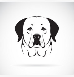 A dog headlabrador retriever on white vector