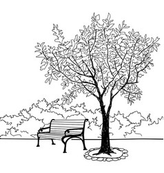 Bench in park with tree city park landscape vector