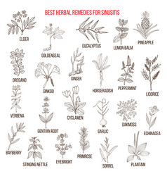 best herbal remedies for sinusitis vector image vector image