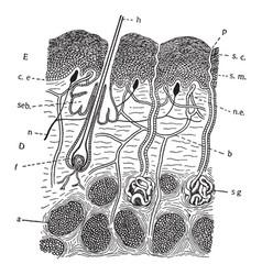 Mammal skin vintage vector