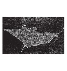 Cellular tissue vintage vector