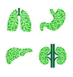 Human organs with leaves vector