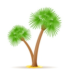 Palm tree 23 vector