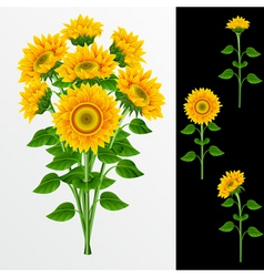 bouquet from yellow sunflowers on a white backgrou vector image vector image