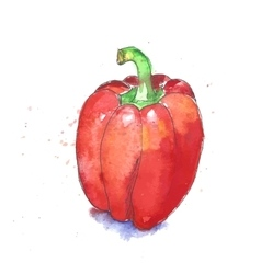 Red bell pepper vector image