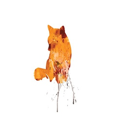 Watercolor Fox on a white background with color vector image