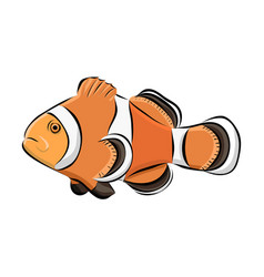 hand drawn clown fish vector image vector image