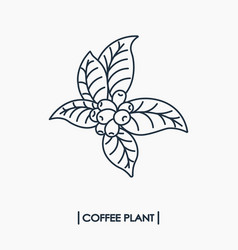 Line icon coffee plant with leaf and beans vector