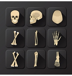 Skull and bone medical and health icon set vector