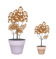 Abstract Isometric of Trees in Flower Pot vector image