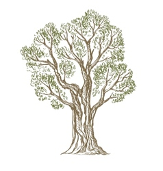 Hand drawn tree vector