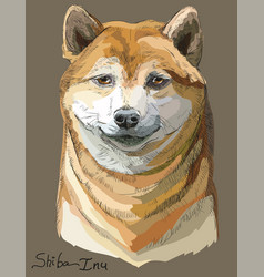 colored shiba inu portrait vector image