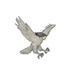 harpy swooping drawing vector image