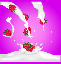 red raspberry fruits falling into the milk splash vector image vector image