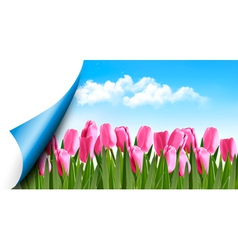 Spring background with pink tulips and a page vector image