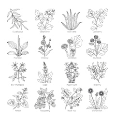 Medicine plants and herbs collection vector