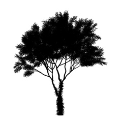 Black tree silhouette isolated on white background vector