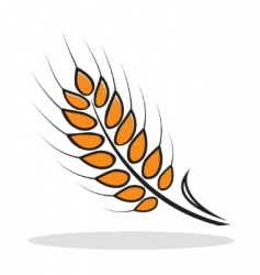 abstract wheat vector image