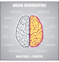 Brain left analytical and right creative vector image