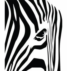 zebra stripes vector image