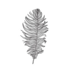 hand drawn smoth black and white dove bird feather vector image