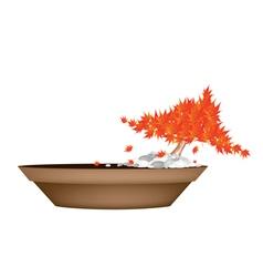 Beautiful Maple Bonsai in A Flower Pot vector image