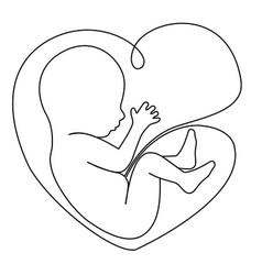 baby in womb vector image