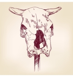 Cow skull hand drawn llustration realistic vector