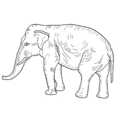 Sketch a large African elephant on white vector image vector image