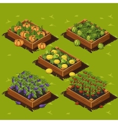 Vegetable garden box vector