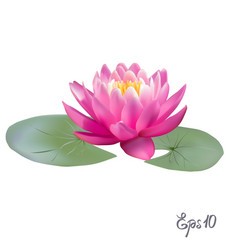 Beautiful realistic of a lily or vector