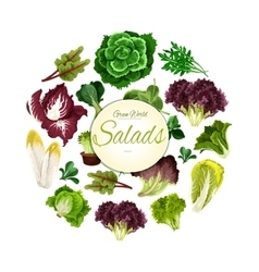 Salads poster of green leafy vegetables vector image