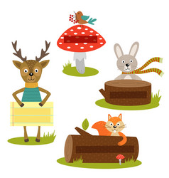 Set of isolated forest animal with frame vector