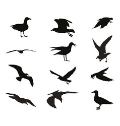 Set of silhouettes of seagulls vector