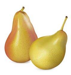 Pears on white vector