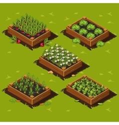 Vegetable Garden Box vector image vector image