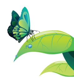 Butterfly on leaf vector