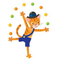 funny cat juggler vector image