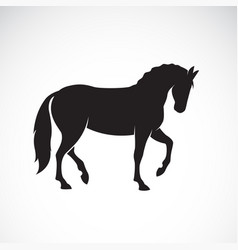 horse isolated on white background wild vector image vector image