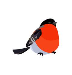 colorful icon of bird bullfinch vector image