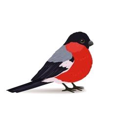 Winter bullfinch bird vector image vector image